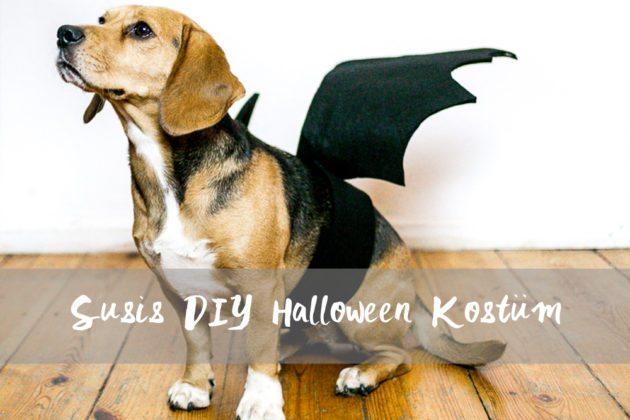 DIY Halloween Fledermaus Hundekostüm