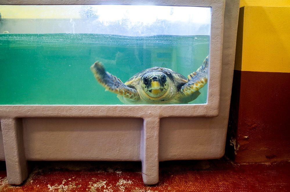 Schildkröten Asinara