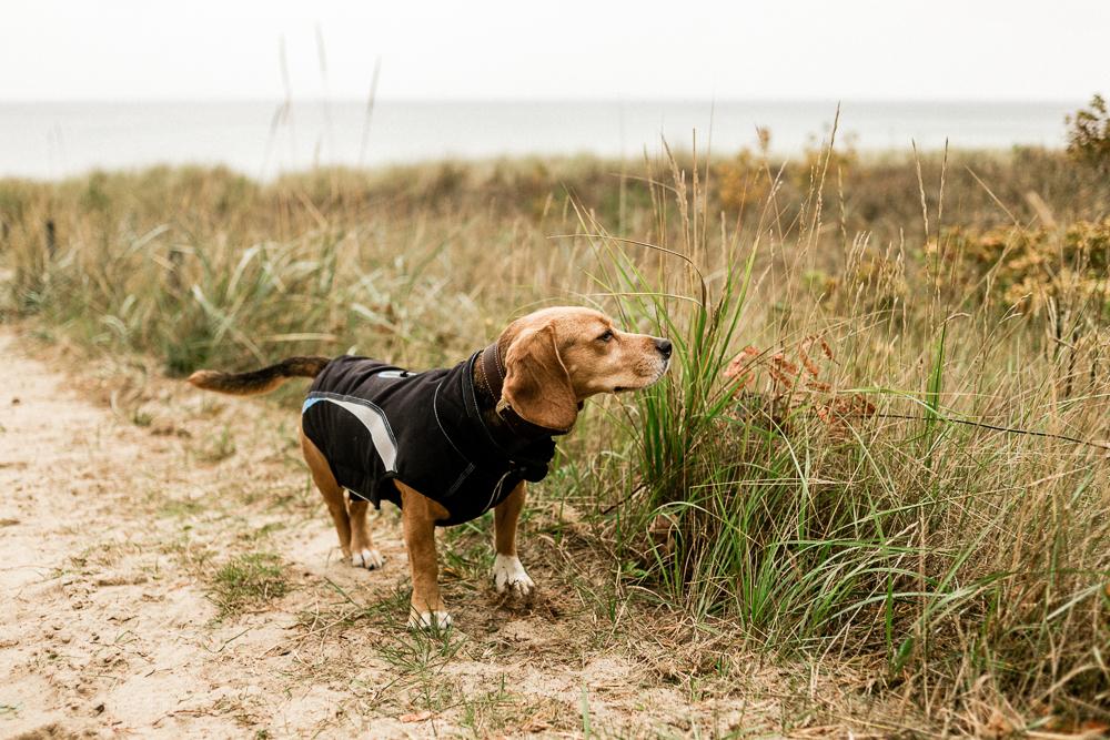 Mit Kleinkind auf Rügen Regenbogen Ferienanlage Göhren Ostsee Erfahrungen Hund