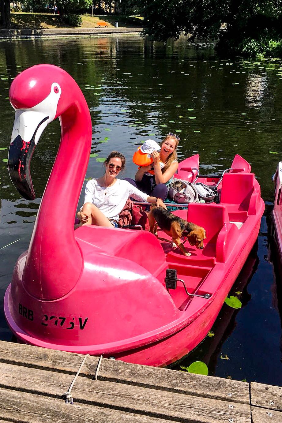 Flamingo Tretboot Potsdam